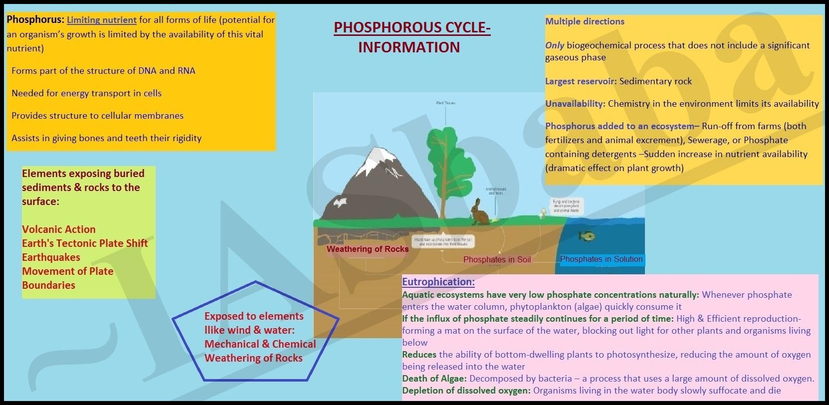 Phosphorous Cycle Info