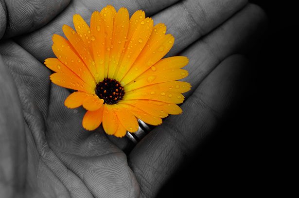 flower-in-the-hand